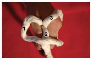 A hand holding three stands of rope. Strand one is crossed over strand 2.