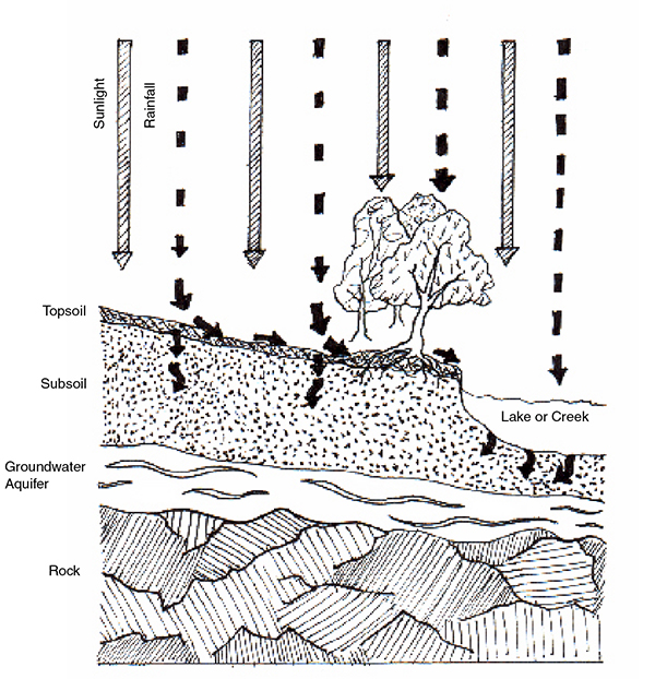 Graphic showing how soils, water, and plants work together