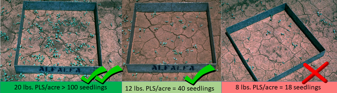 Different seed rates and their respective number of emerged seedlings