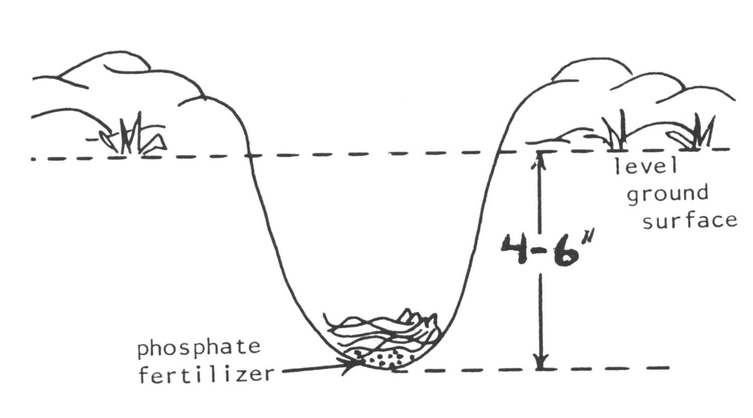 Graphic showing proper planting depth.