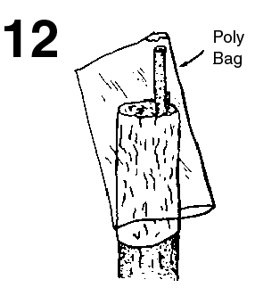Polyethylene bag placed over the stock with the scion protruing out of a clipped corner of the bag.