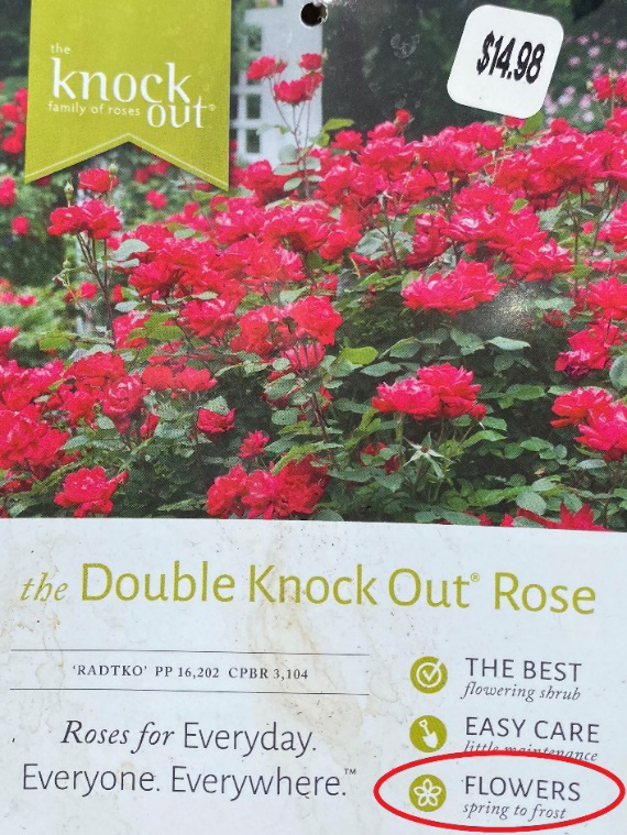 Knock out rose tag with the blooming period circled