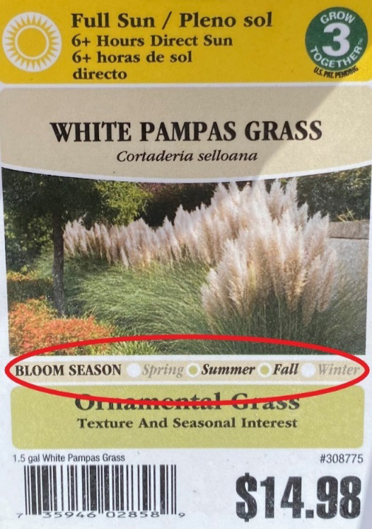 White pampas tag with the bloom time circled