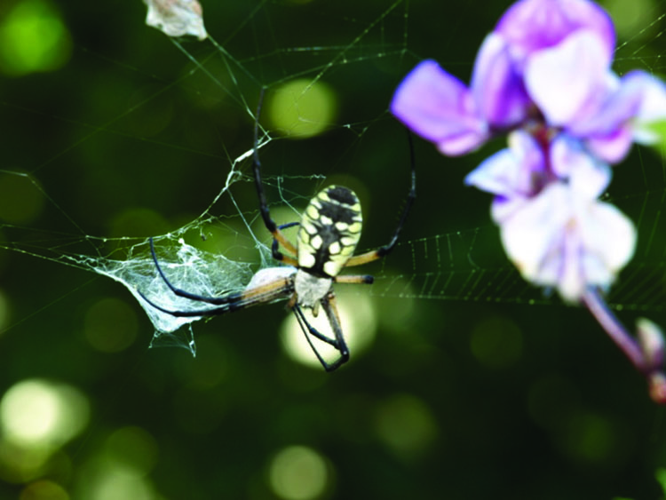 Spider on a web
