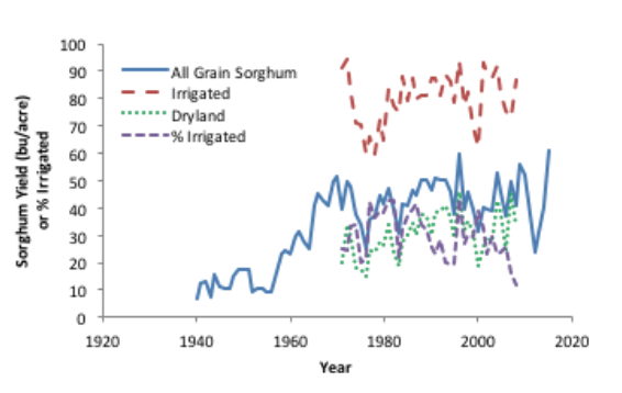 Historic average yield for all grain sorghum grown in the panhandle
