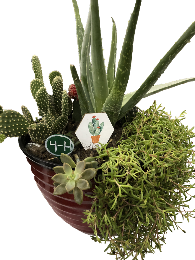 A plant pot with several types of plants in it.