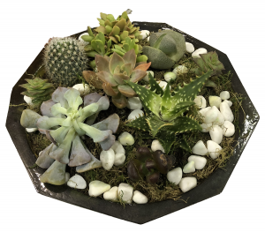 A geometric planter which contains plants.