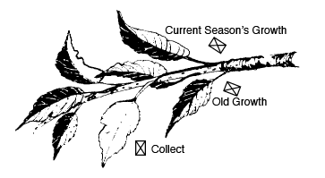 Spots indicating where you should collect leaves and where the old growth is.
