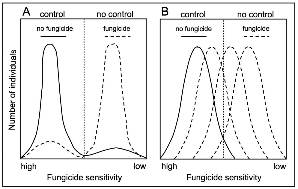 Two charts comparing depiction of the possible ways fungicide resistance develops in population of a fungal pathogen. Chart A shows abrupt resistance for no fungicide and fungcide for control and no control. Chart B shows gradual resistance development for no fungicide and fungcide for control and no control.