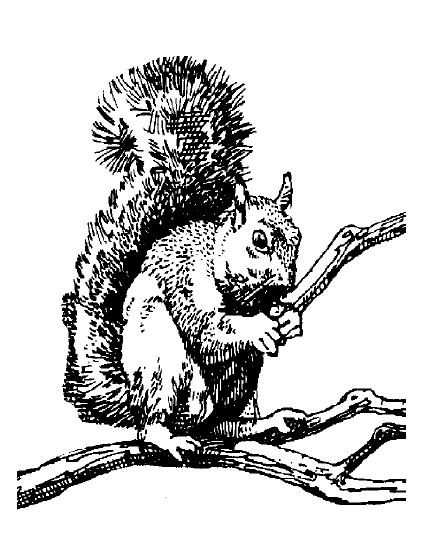 Squirrel on a branch.