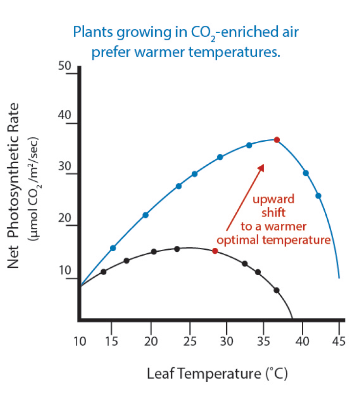 Relationship between leaf temperature and net photosynthetic rate.