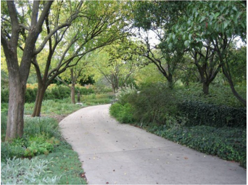 The trees along this pathway provide an implied edge to the path and an overhead canopy