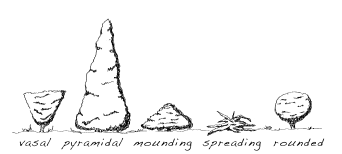 Common forms of plants: vasal, pyramida, moundnig, spreading, and rounded.