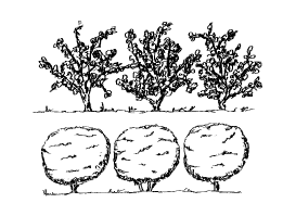 Groups of plants