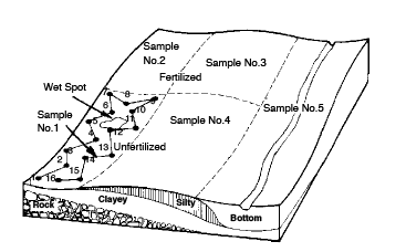 A field that is divided into uniform sampling areas and follows a random pattern. When sampling, avoid unusual spots and try to obtain a representative sample.