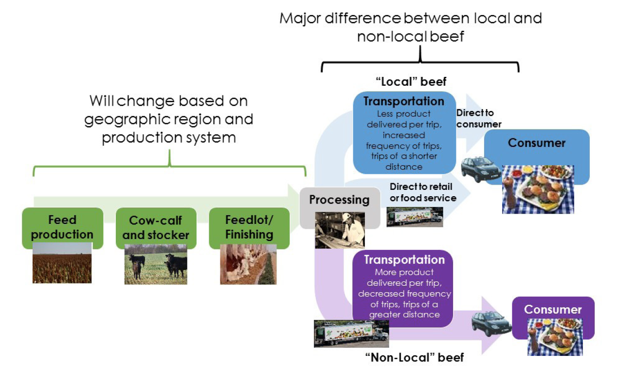 Differences in the beef production chain