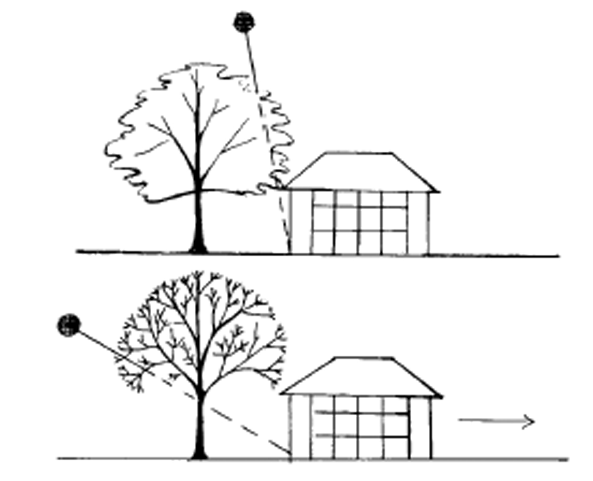 This diagram sketch shows how a tree planted in the wrong location may shield a house from the winter sun.
