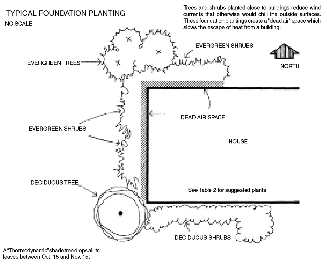This diagram shows an example of typical foundation planting with a house surrounded by evergreen shrubs on the north side and deciduous on the south.
