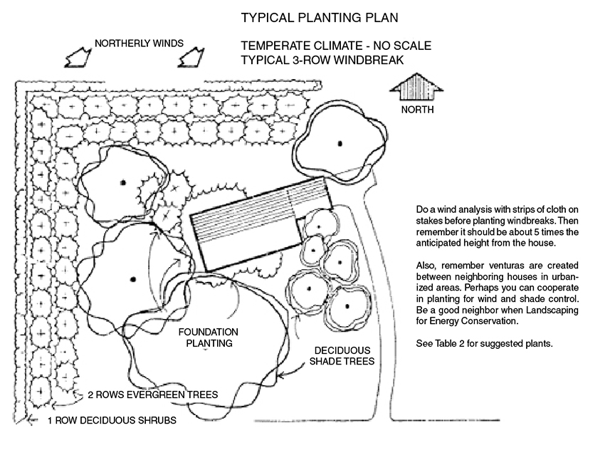This diagram shows another typical planting plan with evergreen trees and shrubs to the norm and deciduous trees to the south.