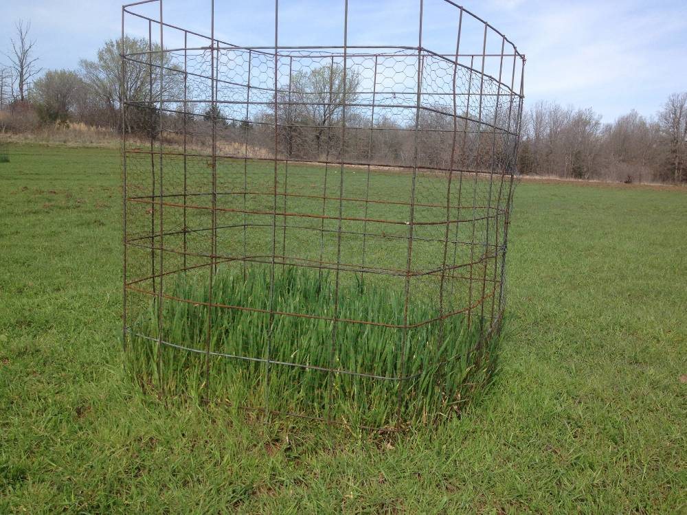 Grazing exclusion cage in a wheat field.