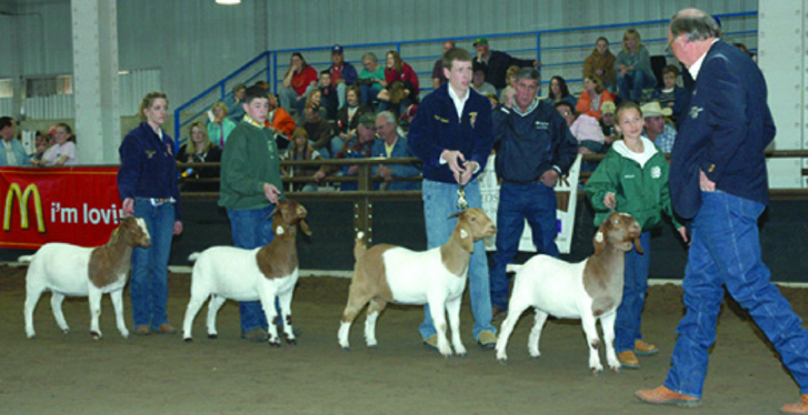 Side view of four goats at a show.