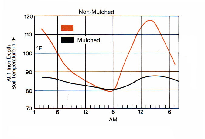 A chart displaying the mid-summer temperature differences between non-mulched plots.
