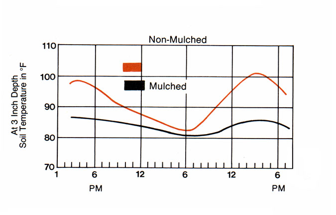 A chart displaying the mid-summer temperate differences bewtween non-mulched and mulched plots.