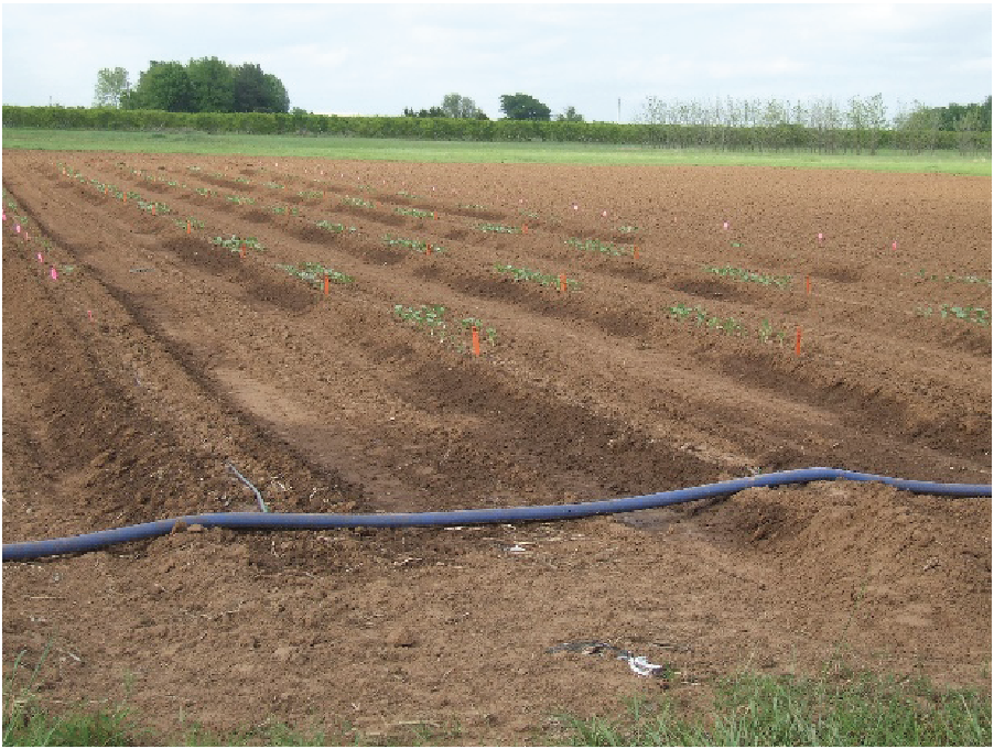 Drip irrigation system with header line