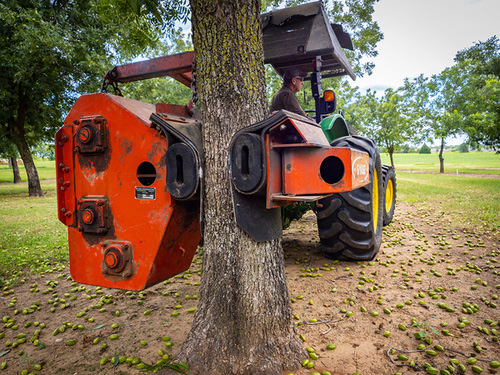 Pecan tree equipment.
