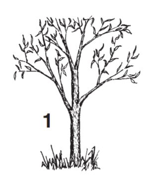 Small tree that represents preparing stock.