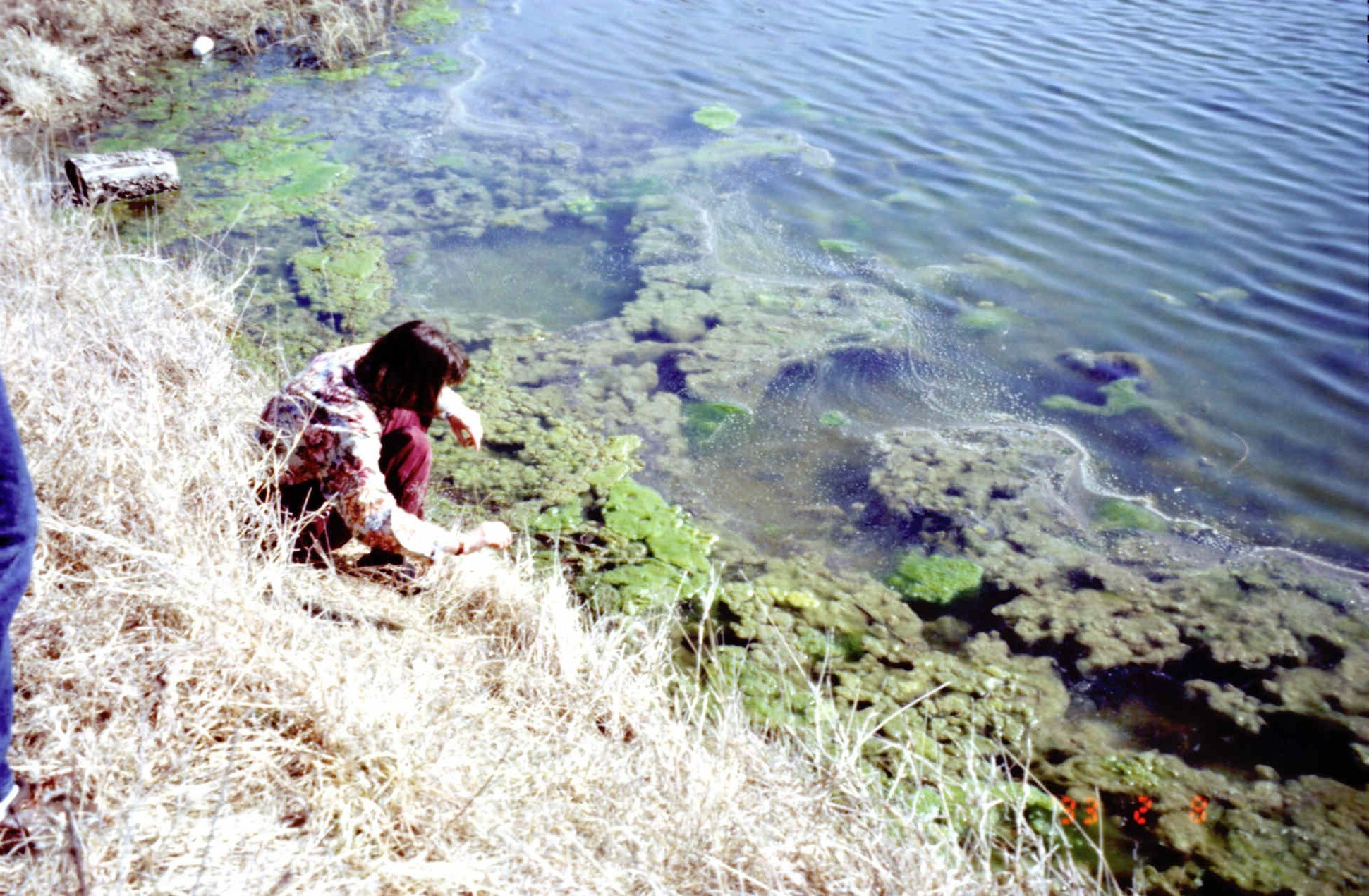 A child on the banks near water with algae.