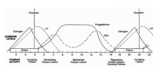 Hormone levels and corresponding ovarian activity in the estrous period