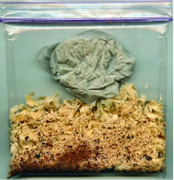 Wood chips and shavings stored in a sealed plastic bag with a damp paper towel