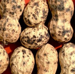 Multiple pod speckling caused by the root-lesion nematode on peanut shells.