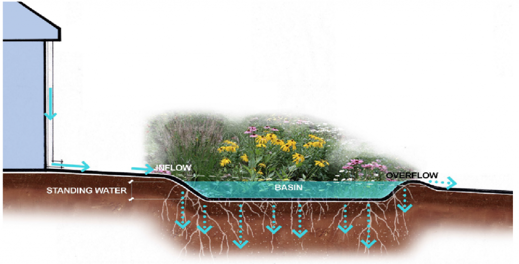 A typical rain garden showing Inflow, Basin and Overflow.