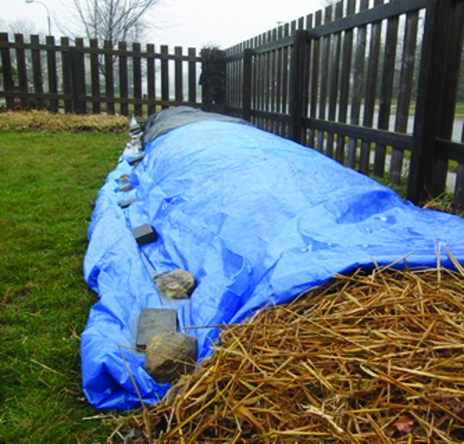 Vermicompost covered with a tarp for winter.