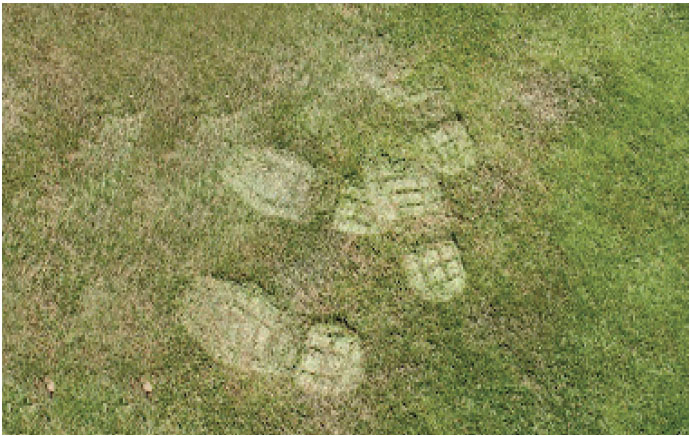 Footprints on grass