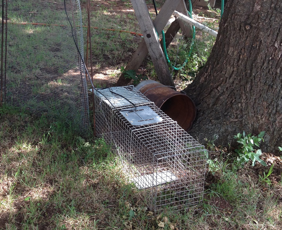 A live-catch trap laying outside next to a tree and other lawn ornaments.