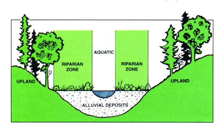 Water Quality Series: Riparian Forest Buffers   Oklahoma State ...