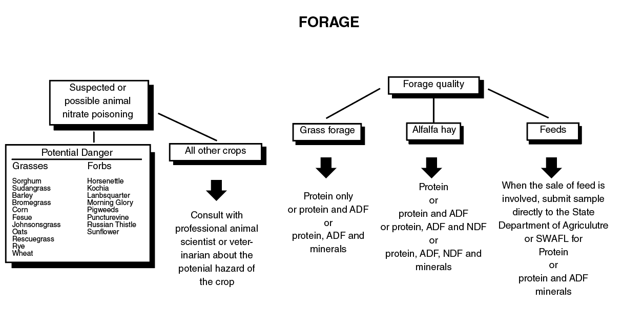 Flowchart for forage testing of forage quality.