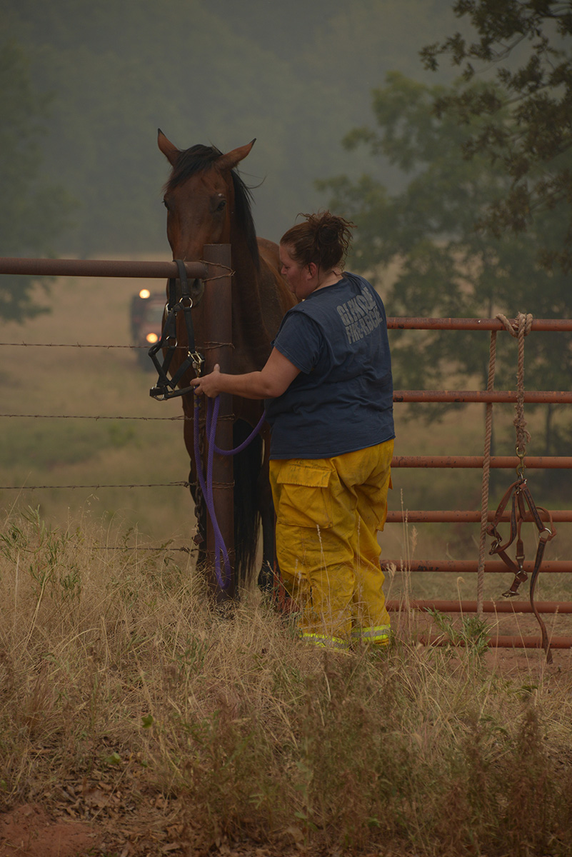 Woman firefighter is untying a rope holding a horse to the fence.