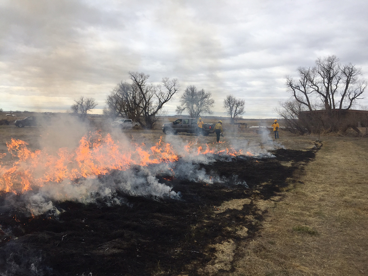 Create a firebreak around the home ignition zone with a prescribed fire before wildfire season.