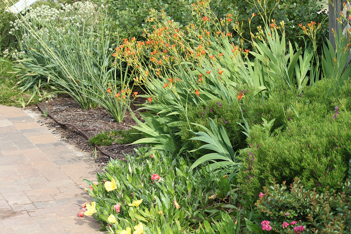 A garden with a variety of plants and ornamental grasses.