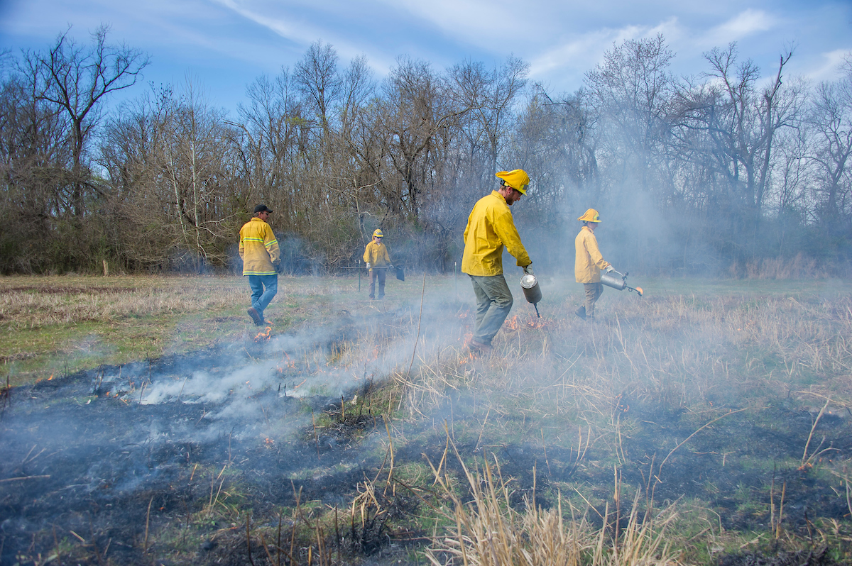 A group of people observing and helping with a prescribed burn.