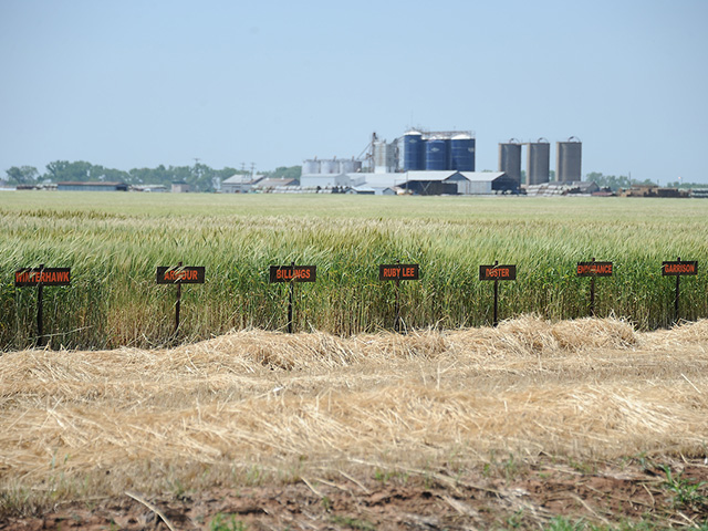 Seven signs labeling the crop varieties in the rows behind them.