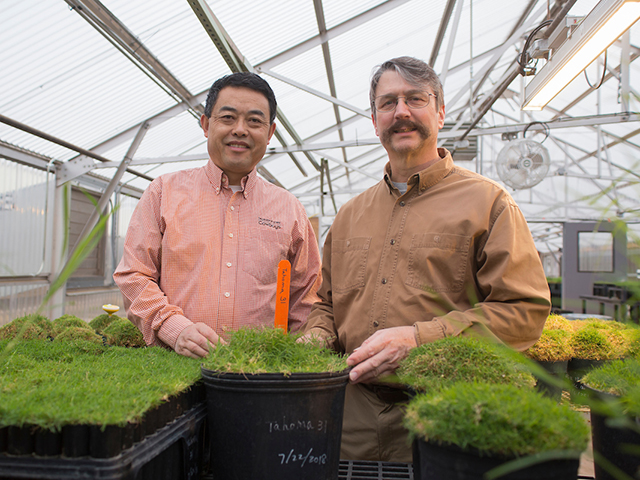 Two men in a greenhouse surrounded by potting plants filled with turfgrass.