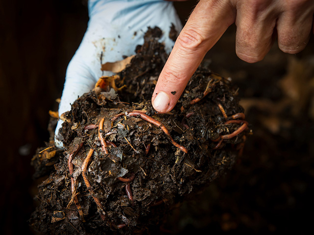 A person holding a handful of wet soil while pointing to the worms that are coming out.